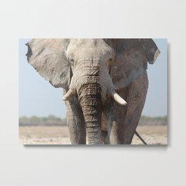 Elephant 12 Metal Print