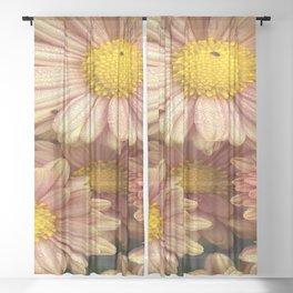 Gerbera - gerbera daisy Sheer Curtain