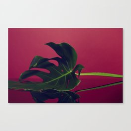 Rouge Monstera Canvas Print