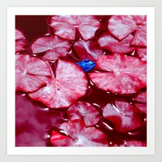 blue frog VI Art Print