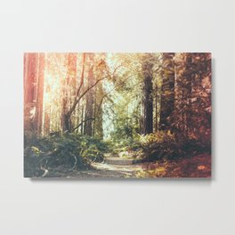 Beautiful California Redwoods Metal Print