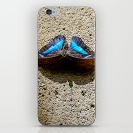 Blue Morpho Butterfly by Teresa Thompson iPhone Skin