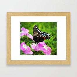 Swallow Tail Butterfly Framed Art Print