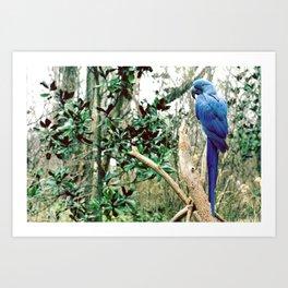 A Blue Macaw Art Print