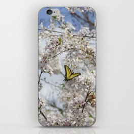 Swallowtail Butterfly in Cherry Blossoms iPhone Skin