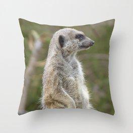 Meerkat Gaze Throw Pillow