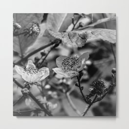 Poppy Seeds Metal Print