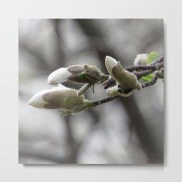 magnolia 01 Metal Print