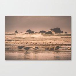 Ocean Seagulls Canvas Print