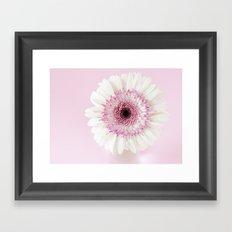 Pink gerbera Framed Art Print