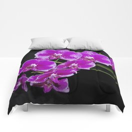 Graceful spray of deep pink orchids Comforters