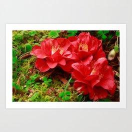 Fallen camellias Art Print