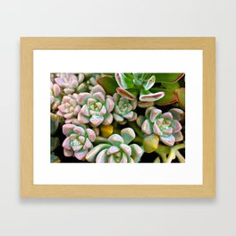 Dewy Delights Framed Art Print
