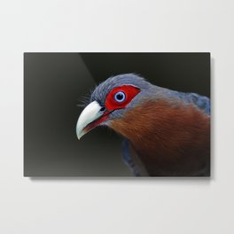 Chestnut-breasted Malkoha Metal Print