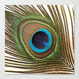 Peacock_20171201_by_JAMFoto Canvas Print