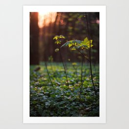 Forest Ground (2) Art Print