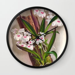 Ionopsis Paniculata Vintage Little White Orchids Wall Clock