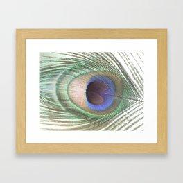 PEACOCK FEATHER II Framed Art Print