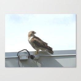 Security camera hawk 8 Canvas Print