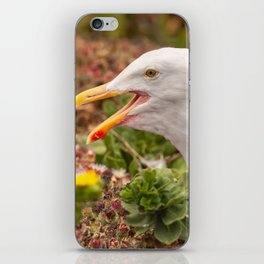 Gull Call iPhone Skin