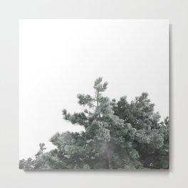 Frozen pine Metal Print