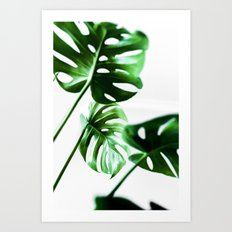 Monstera 4 Art Print