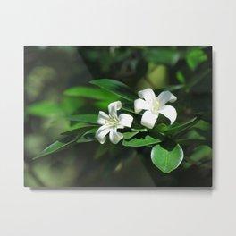 Two White Flowers at McKee botanical gardens in Vero Beach Florida Metal Print