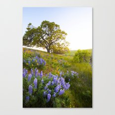 Lupines Canvas Print