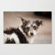 Now thats a face. Canvas Print