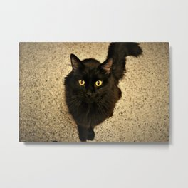 Midnight Metal Print