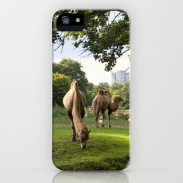 a momentary lapse of reason iPhone Case