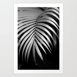 Tropical Darkroom #133 Art Print