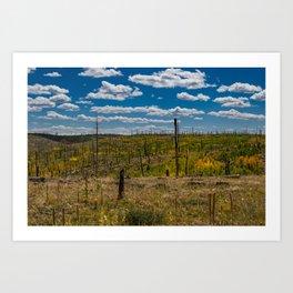 0645 - Autumn Color, North Rim, Grand Canyon Art Print