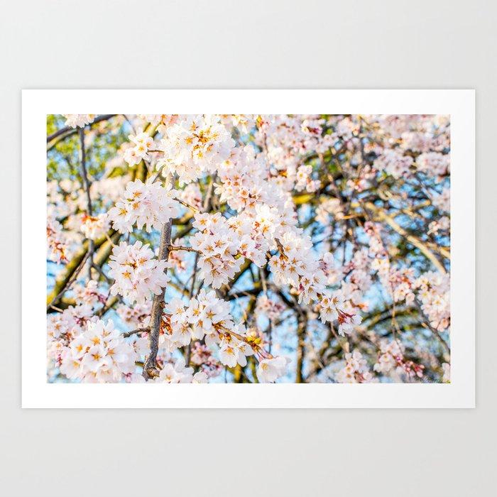 Floods of White & Pink Art Print