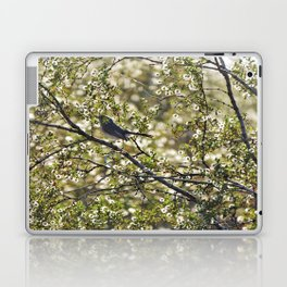 Gnatcatcher Laptop & iPad Skin