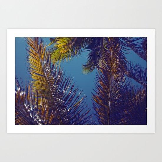 Palm Sky Art Print