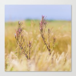Two pink wildflowers Canvas Print