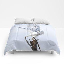 Transcend Comforters