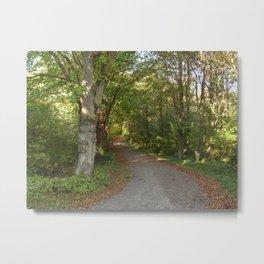 Torup Beech Forest  Metal Print