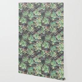 Succulents 2 Wallpaper