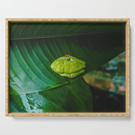 Cute bright green frog with red feet sleeps on a leaf in the rainforest Serving Tray