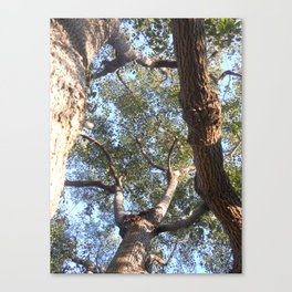 A Shattered Sky Canvas Print