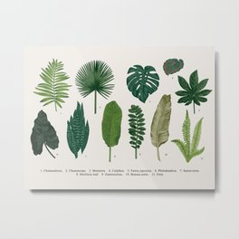 Tropical Leaves Scientific Illustrations Scientific Encyclopedia Labeled Diagram Metal Print
