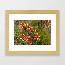 Bright Red Flowers on Top of Irazú Volcano, Costa Rica Framed Art Print