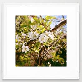 Almond Flowers Framed Art Print