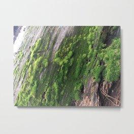 Moss on A Tree Metal Print