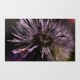 Blow away Dandelion - textured photography Canvas Print