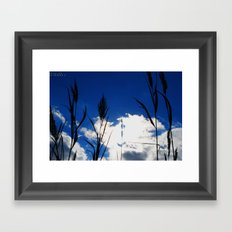 Reeds in the Sun Framed Art Print