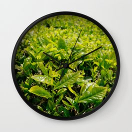Gorreana tea gardens Wall Clock