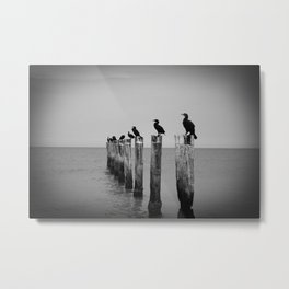 Black and White birds on a post photography Metal Print
